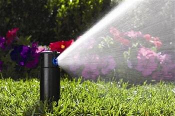 grama esmeralda cuidados irrigação