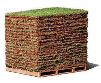 grama natural em palete