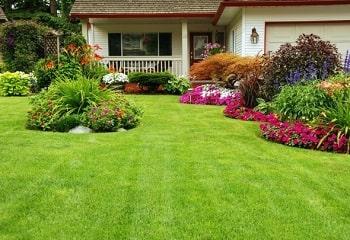 grama para jardim