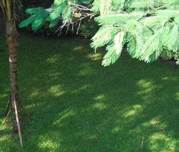 grama para sombra