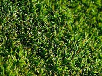 grama são carlos plus
